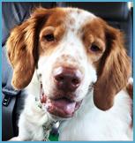 Sammy the Therapy Dog